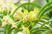 krásná orchidej v zahradě