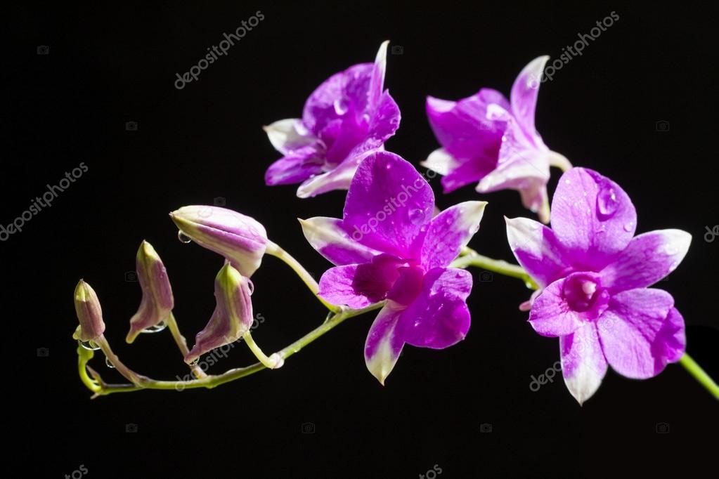 Purple orchids flower