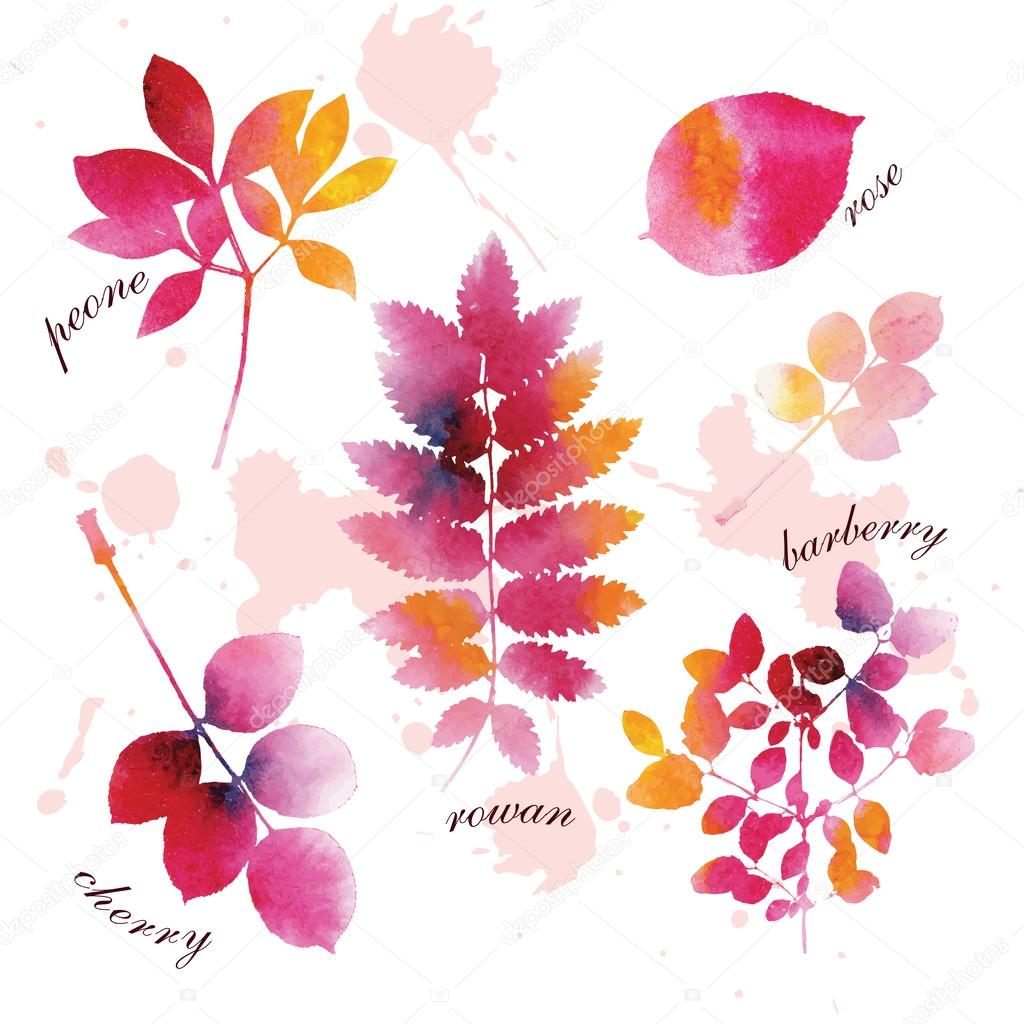 Set of beautiful watercolor autumn leaves.