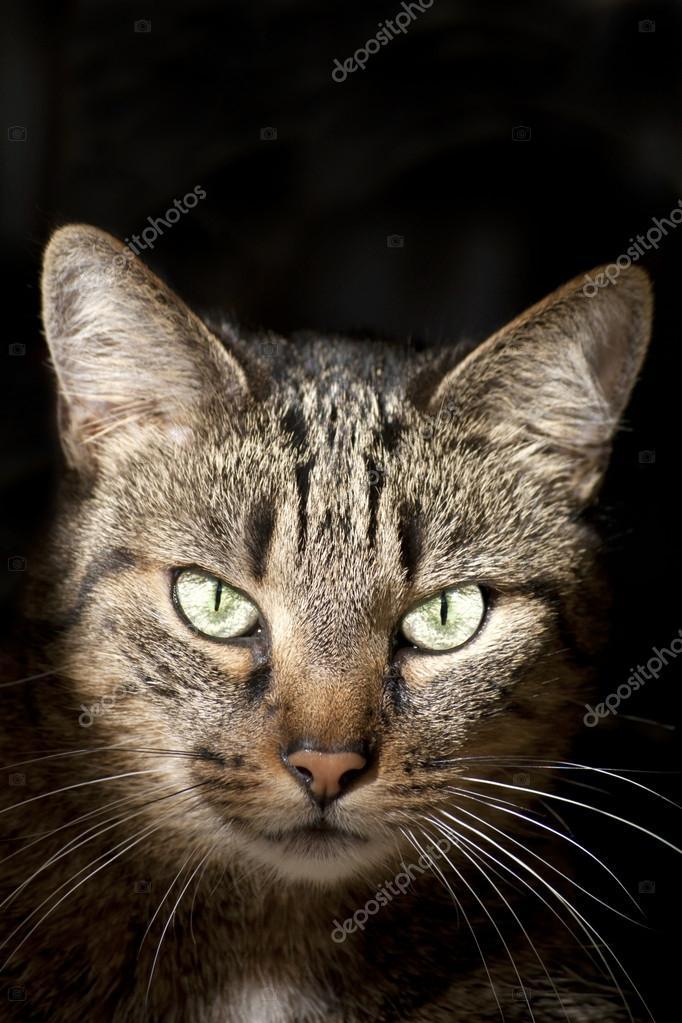 Cat Portrait on Dark Background