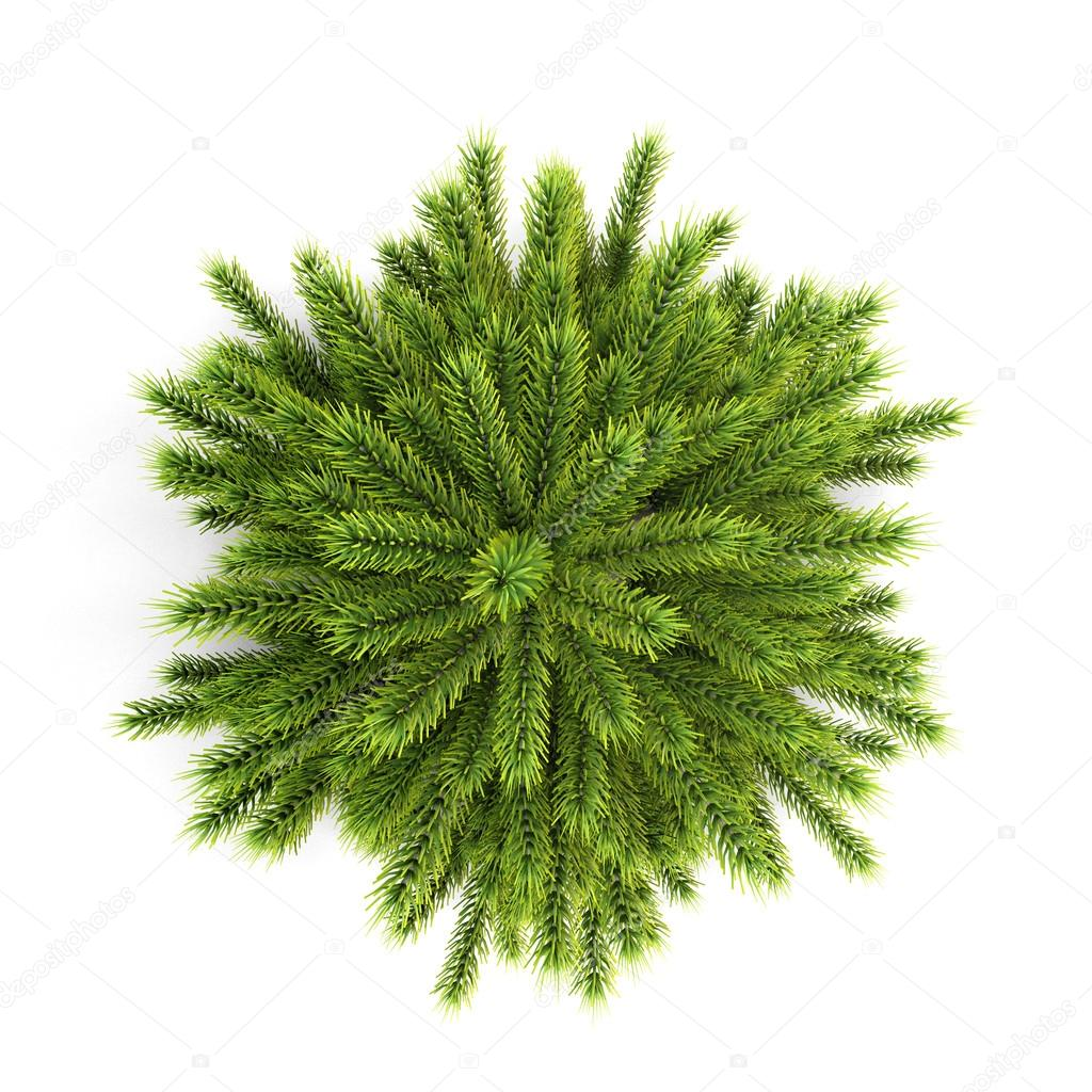 Top view christmas tree without ornaments on a white