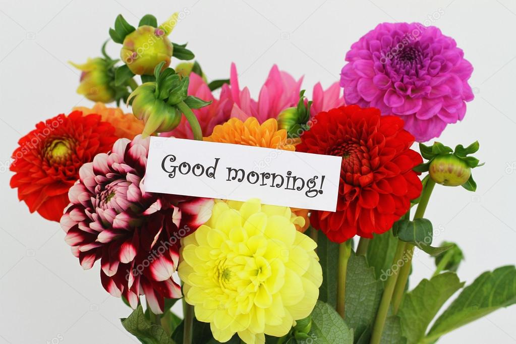 Good morning card with colorful dahlia flowers on white — Stock ...