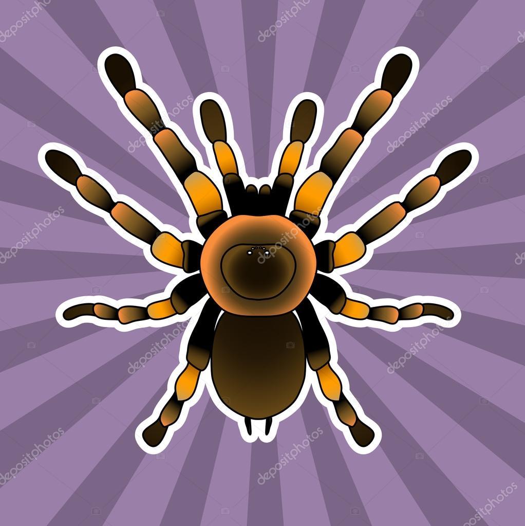 Insect anatomy. Tarantula spider. Brachypelma smithi, spider female ...