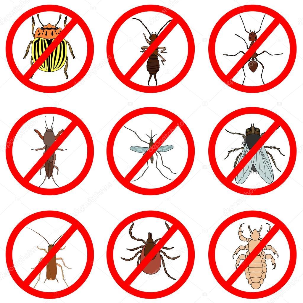 ravageurs et lutte contre les insectes les ic nes d finies tique et cricket bug et fourmi. Black Bedroom Furniture Sets. Home Design Ideas