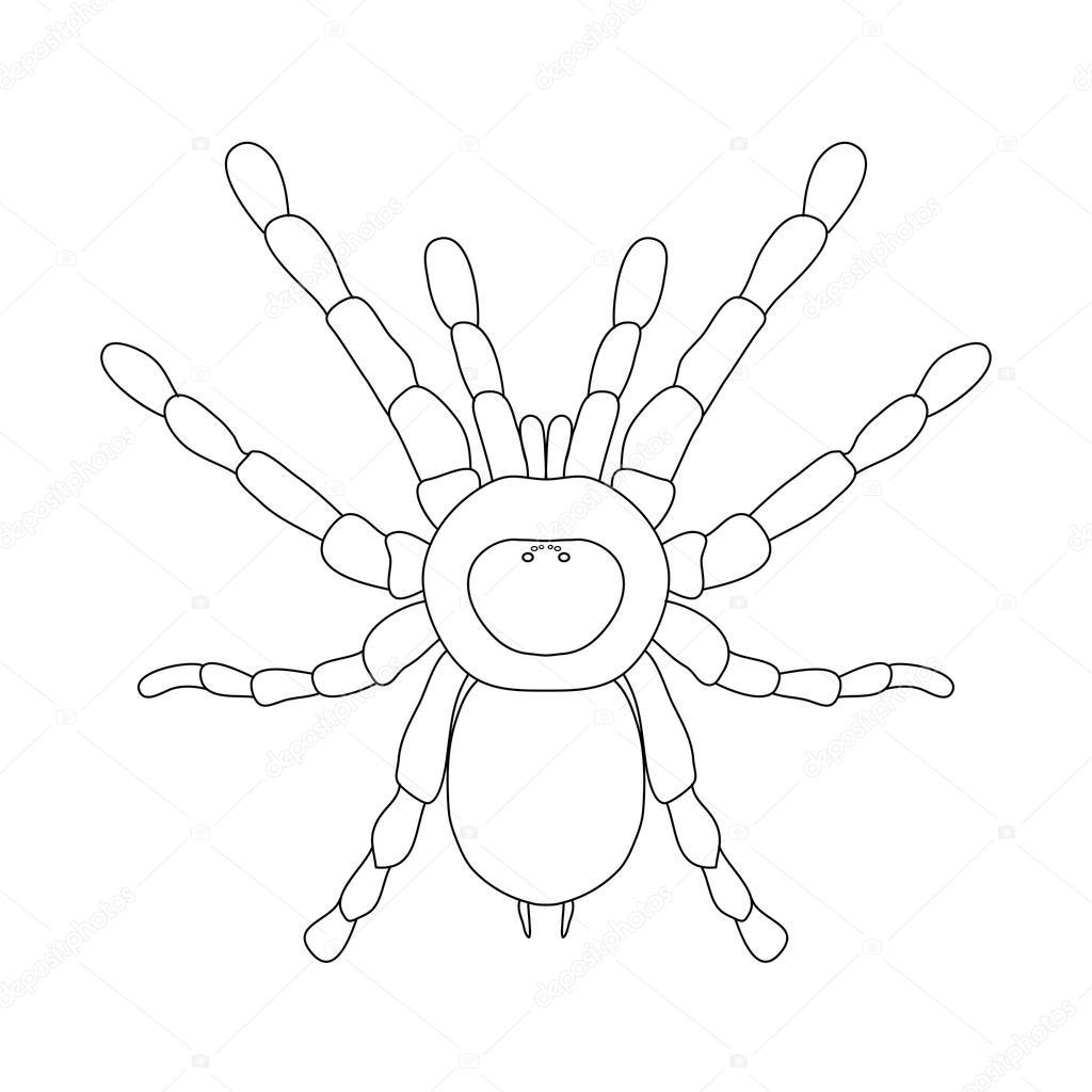 Tarantula araña Brachypelma smithi, la mujer araña. vista superior ...