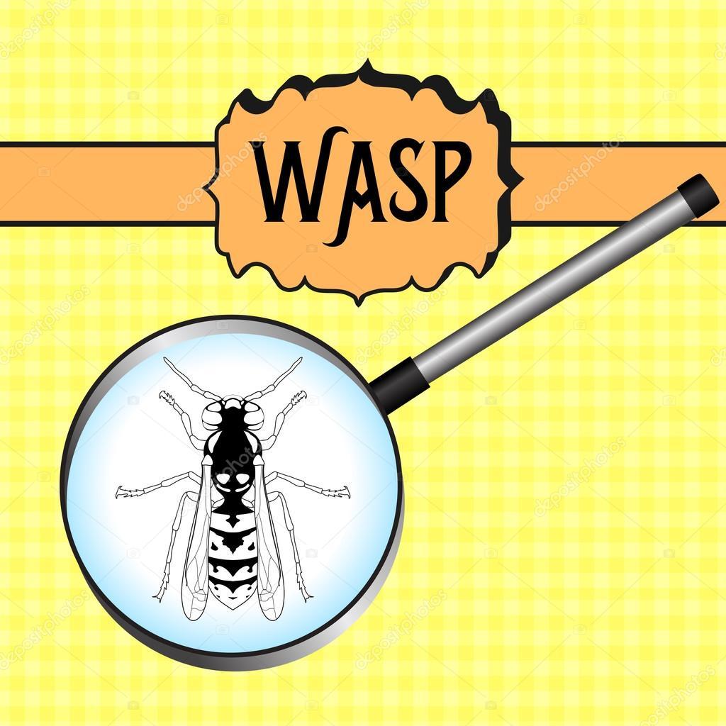 Insetto In Lente Di Ingrandimento Wasp Schizzo Di Vespa Design Di