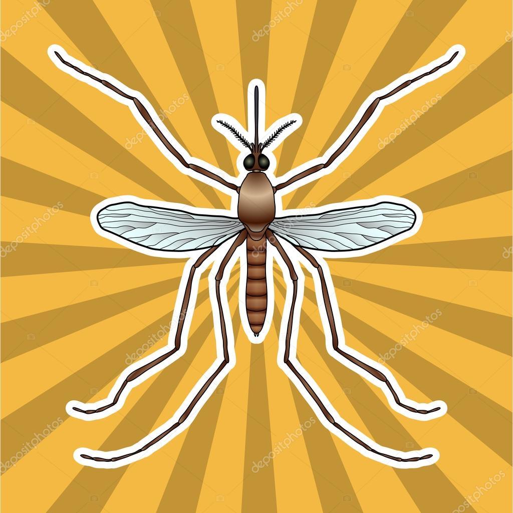 Anatomía de insectos. Mosquito realista de la etiqueta engomada ...