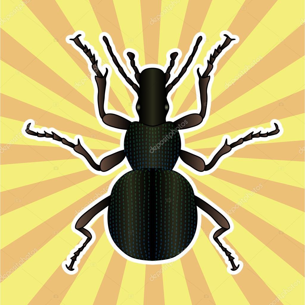 Anatomía de insectos. Error de escarabajo de tierra de la etiqueta ...
