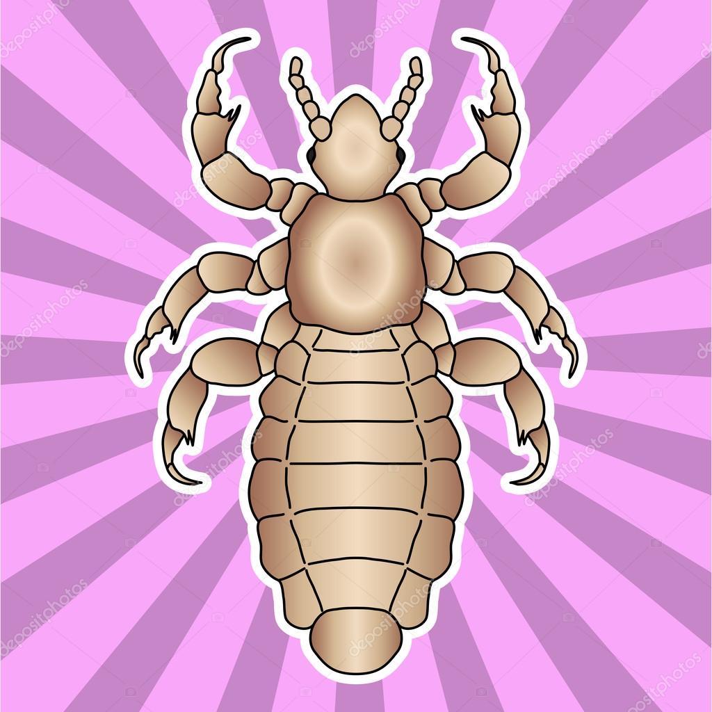 Anatomía de insectos. Piojo humano de la etiqueta engomada la cabeza ...