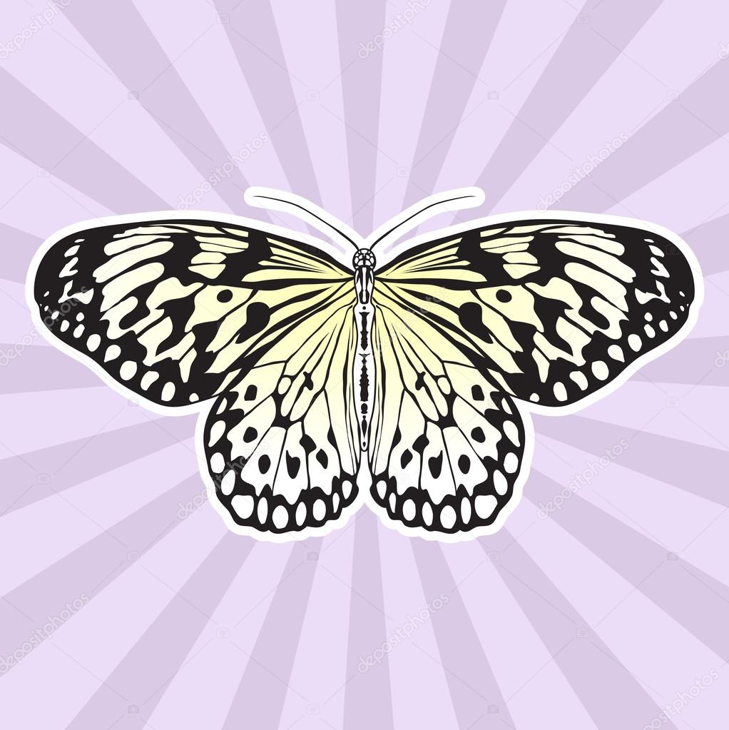Anatomía de insectos. Etiqueta engomada de la mariposa Idea Leuconoe ...