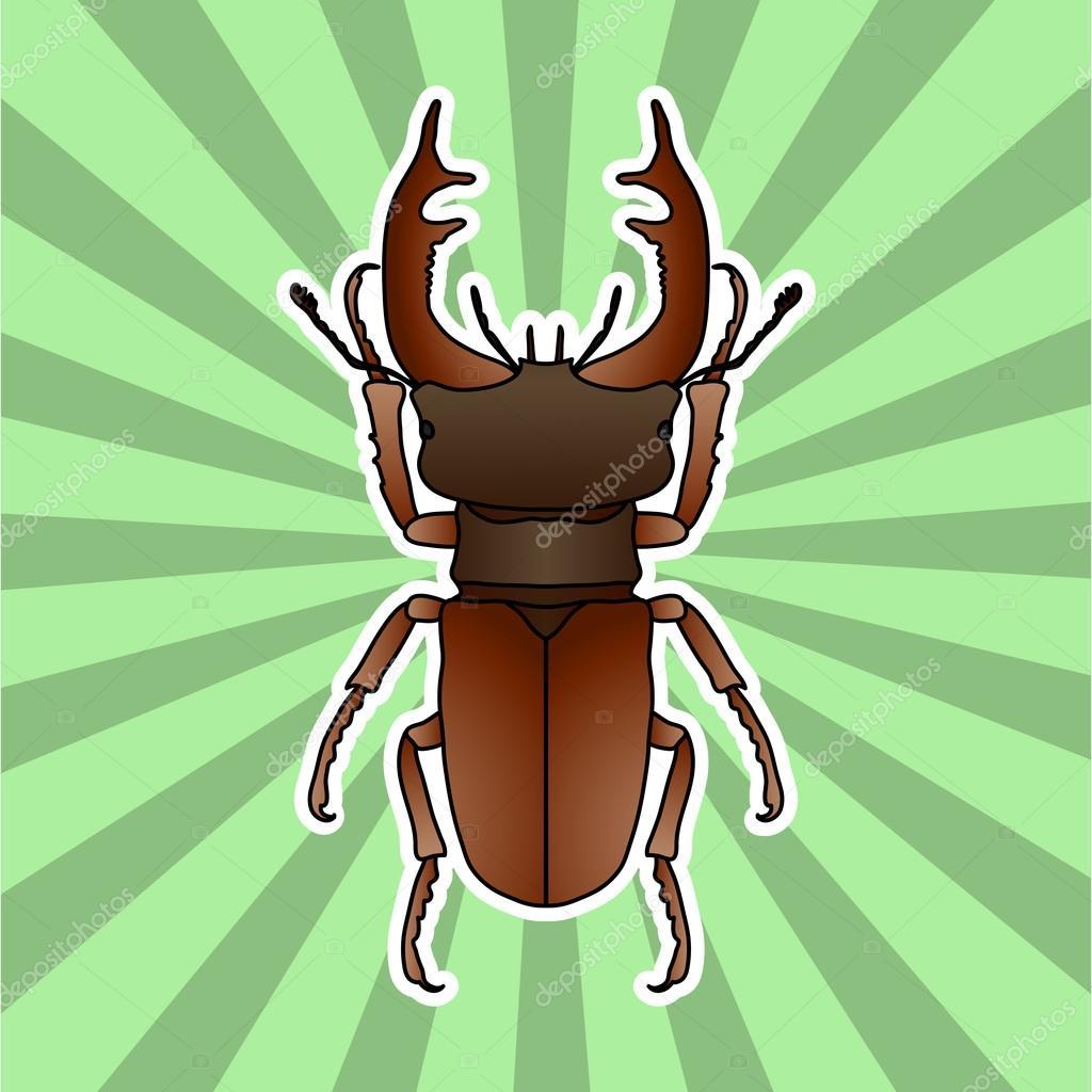 Anatomía de insectos. Despedidas de soltero-escarabajo de la ...