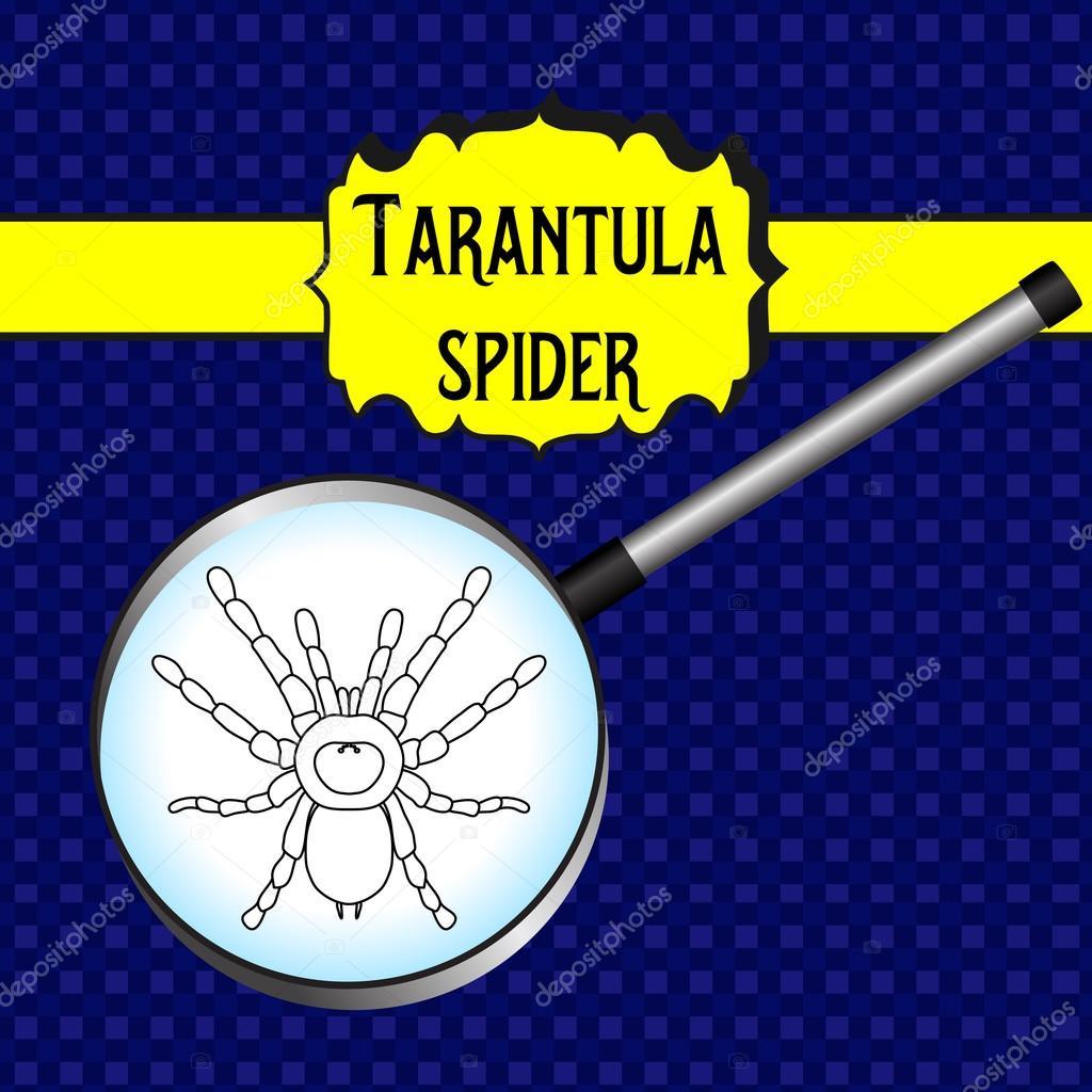 insecto en lupa. Brachypelma smithi, la mujer araña. Dibujo de araña ...