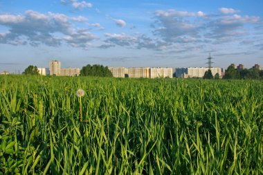 Grass on the outskirts of city