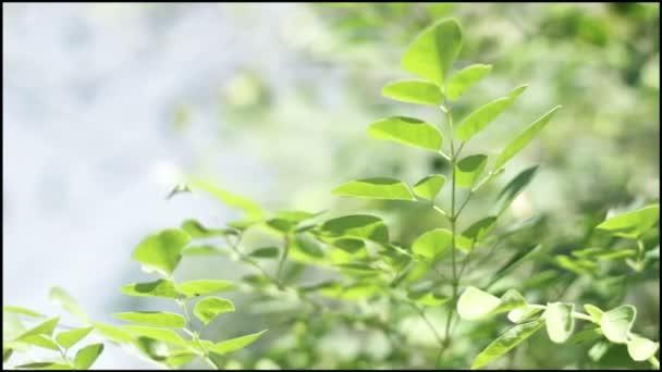listnatého stromu jarní sezóny
