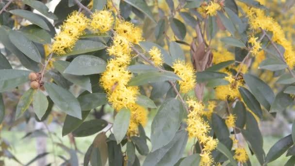 Munkavállaló méhek talál nektár sárga virág.