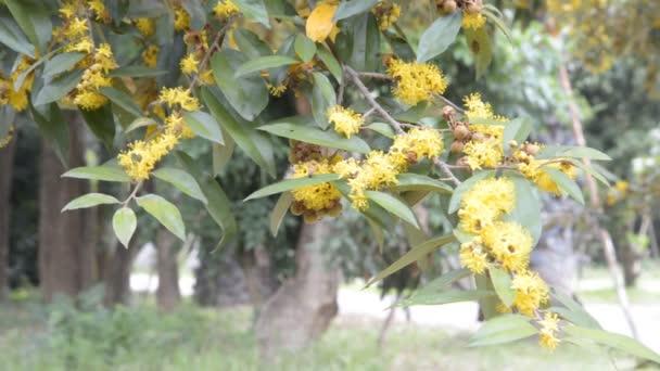 Včely najít nektar na žluté květině