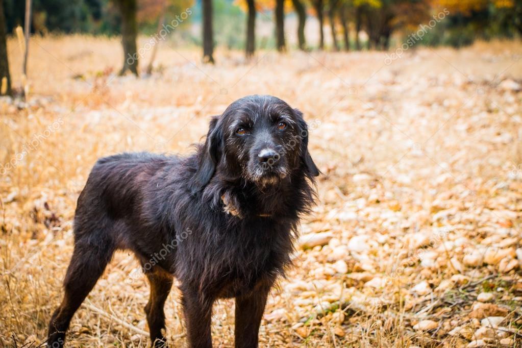 Truffle hunting dog takes a break