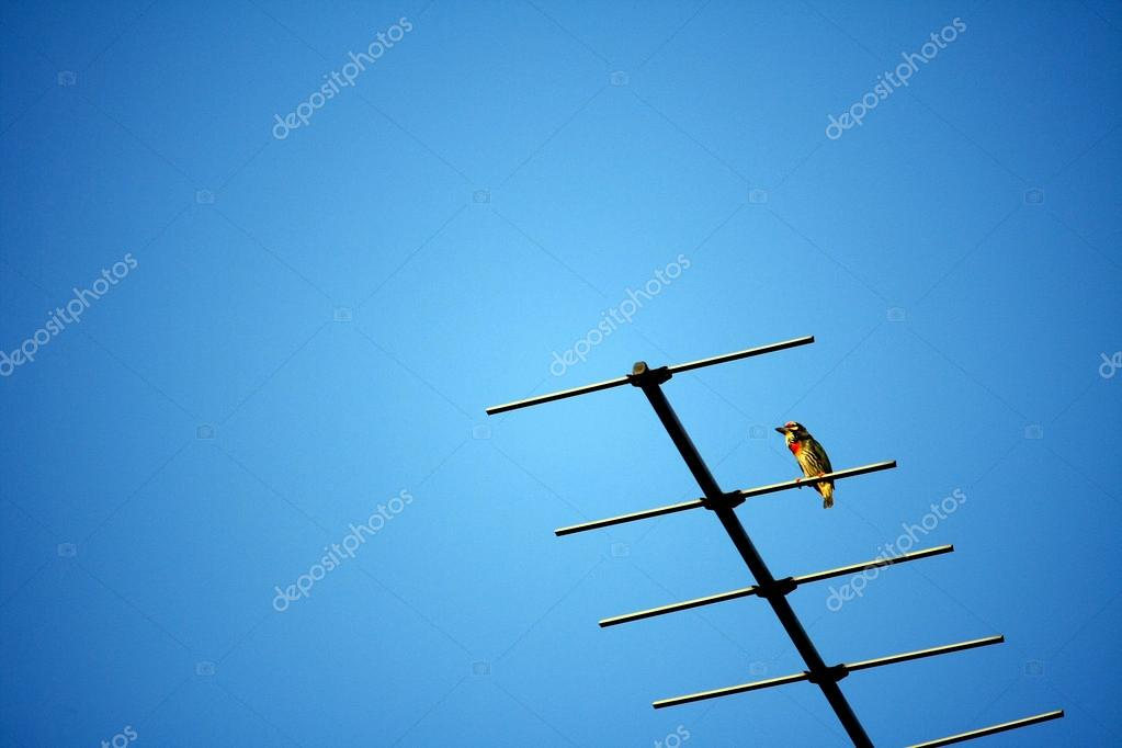 Bird on TV antenna and a clear blue sky
