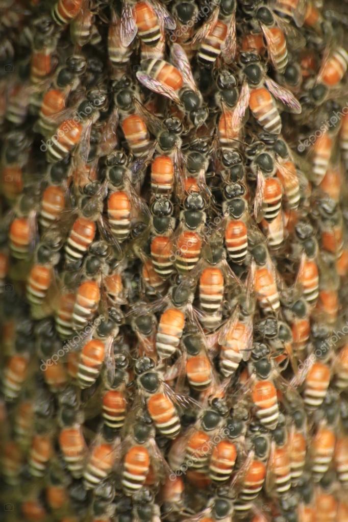 Bee and radiator