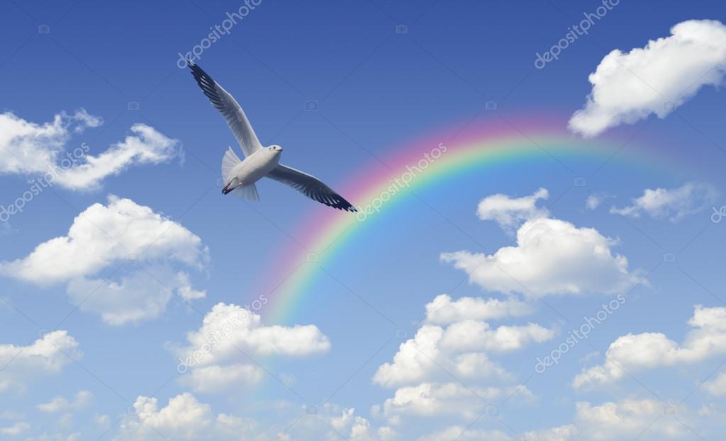 Mouette Survolant Arc En Ciel Avec Nuages Blancs Et Ciel Bleu