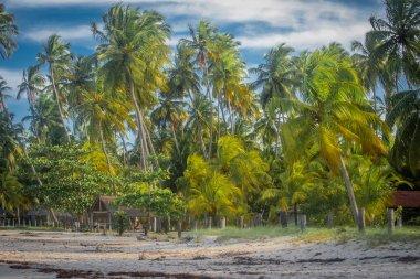 Carneiro's Beach - Brazil