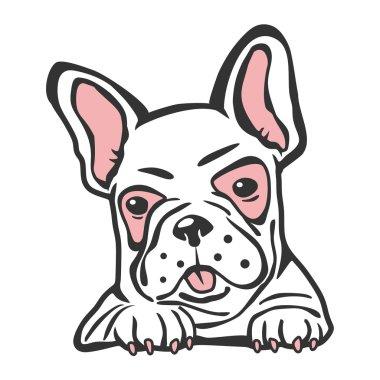 Bulldog french pet