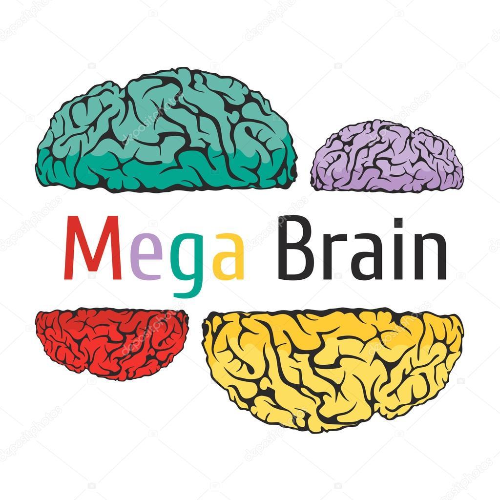 Anatomía de la escuela de cerebro ciencia educación conocimiento ...