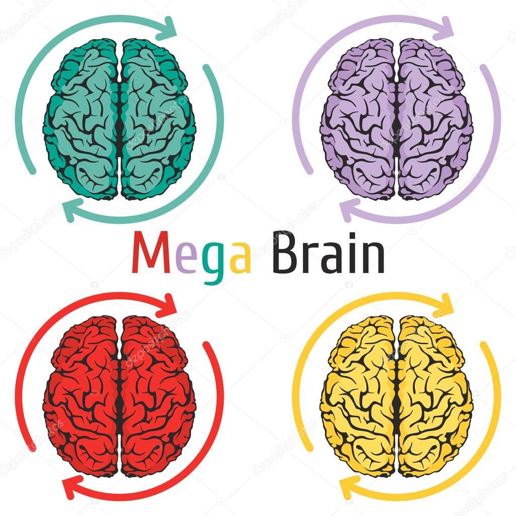 brain science education knowledge idea anatomy refresh — Stock ...