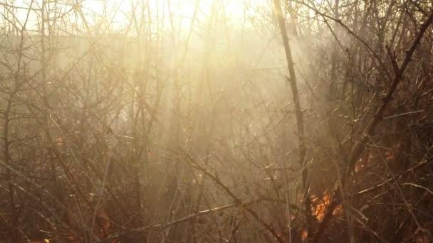 Slunce svítí skrz kouř a oheň, vypalování suché trávy a keře brzy na jaře nebo pozdního podzimu