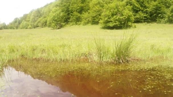 Szitakötő - párzási szezon, peterakási, hegyi nyári zöld tó, háttérben az erdő