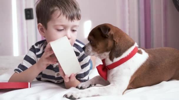 Kleiner Junge schenkt Chihuahua-Hund in Fliege Herz Liegen. Valentin.