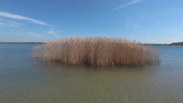 krásné jezero s rákosím na letní den