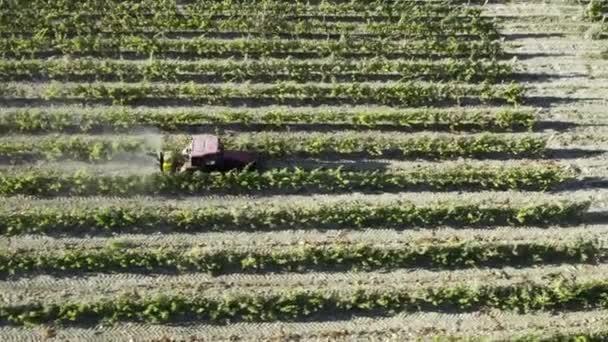 A szőlőt rovarirtó szerekre permetezik a szőlőkben. Műtrágyával öntözve. Traktor permetezett szőlőskertek. Légi kilátás traktor permetező szőlő a szőlő kora nyári reggelen
