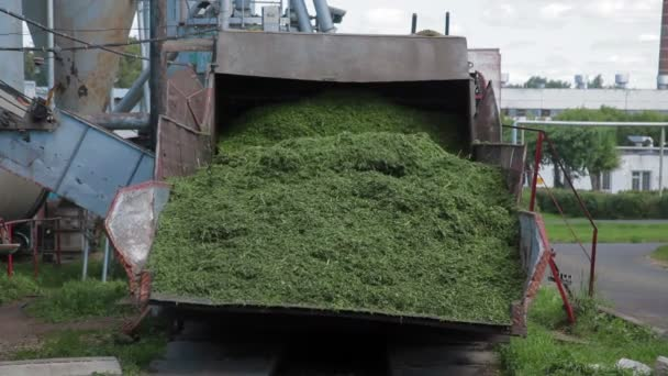 Herbal feed production for poultry from grass