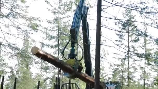 Feller Buncher loads tree trunks