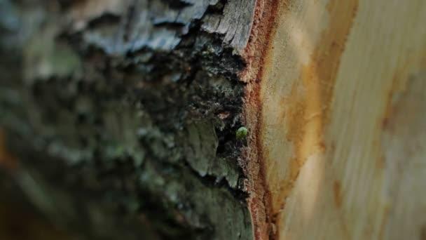 Gefällten Baumstamm im Wald