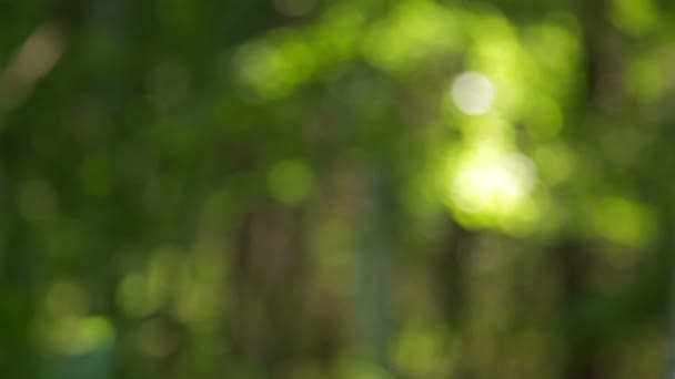 Rack hangsúlyt a magas erdei fák