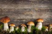 Fotografie jídlo pozadí s hříbky a moss