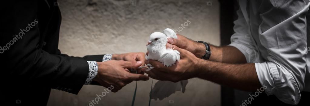 White Dove Symbol Of Peace Stock Photo Germanopoli 98963686