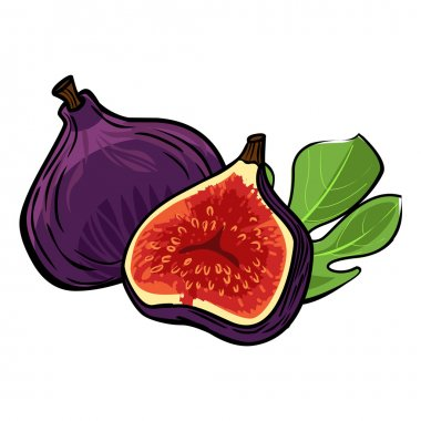 Vector fig isolated background