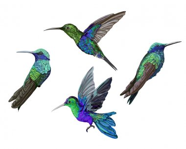 Hummingbird (colibri) birds set
