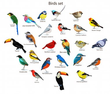 big set birds.
