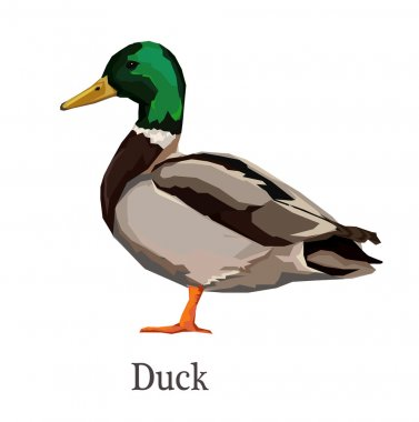 colorful duck illustration