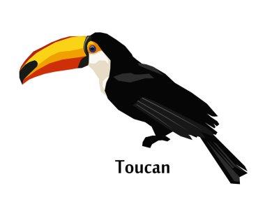 toucan exotic bird