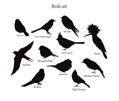 Birds set, animal wildlife