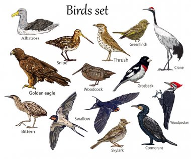 set of birds flying
