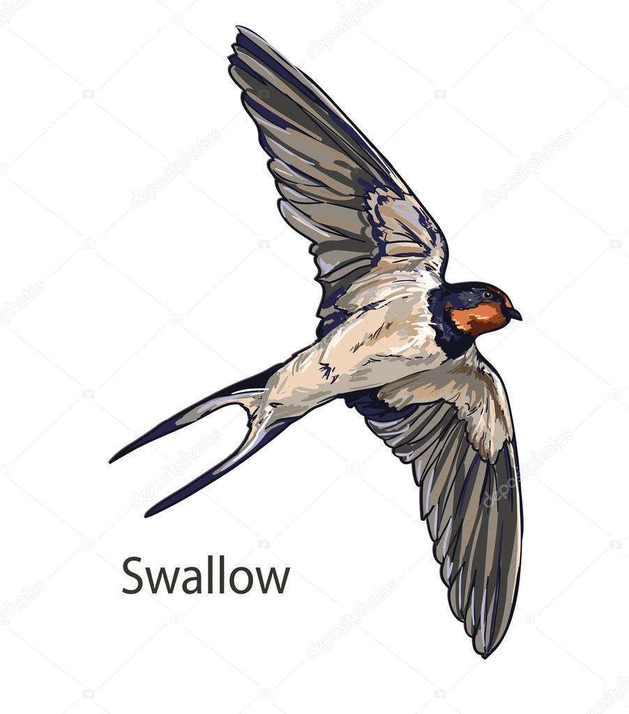 Swallow bird flying — Stock Vector © AlsouSh #86605630