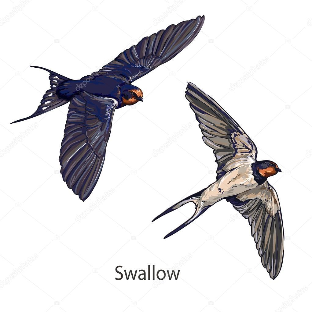 sonido de aves volando descargar google