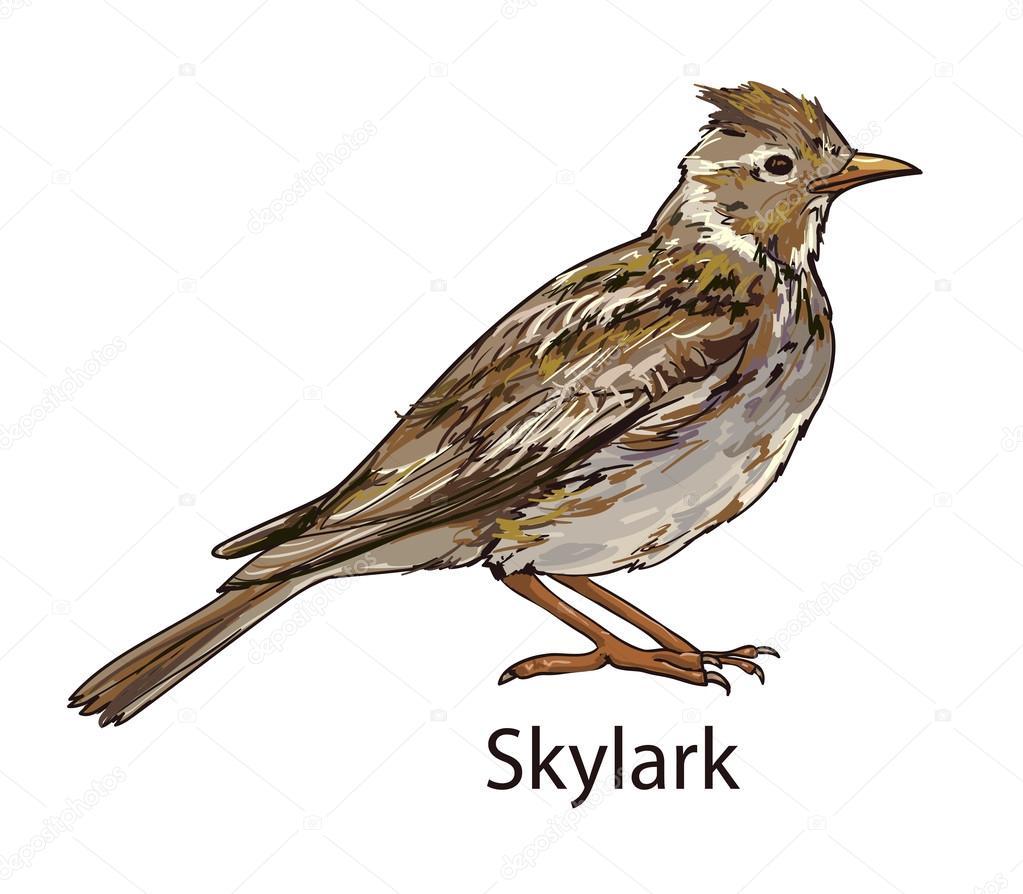 ひばり鳥動物 ストックベクター Alsoush 86605698