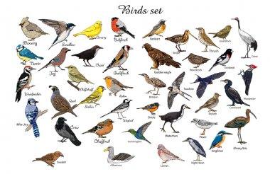big set of birds